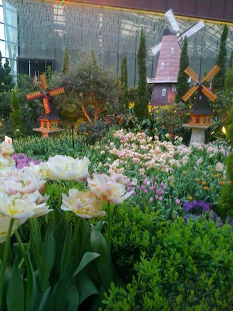 Flower Dome: tulips and windmills