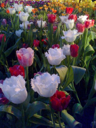 Flower Dome: just like a painting