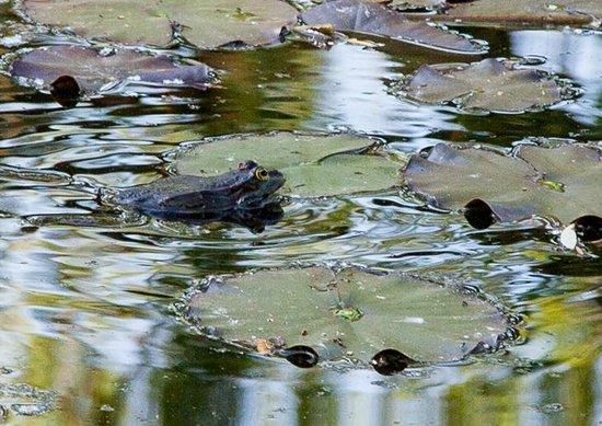 Maison et jardins de Claude Monet : Pond's Master