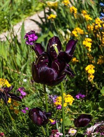 Maison et jardins de Claude Monet : The gardens