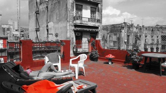 The Purple House : La terrasse