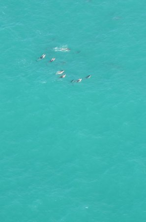 Wings Over Whales : Dolphin pod