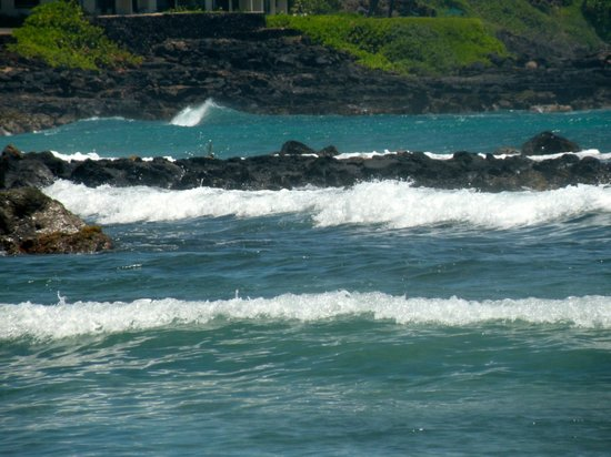 Poipu Beach Park: We are in the shallow area to the left of the park where many turtles come to feed.