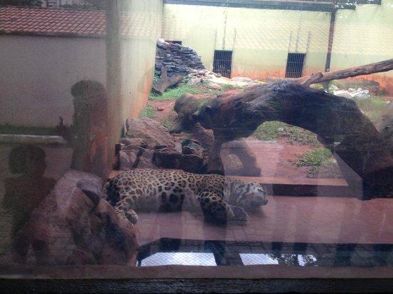 Parque Zoologico : ONÇA