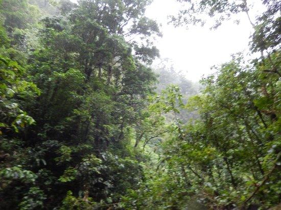 Cataratas Bijagua Lodge: hiking to Bijagua Falls