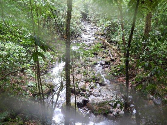 Cataratas Bijagua Lodge: view of the river