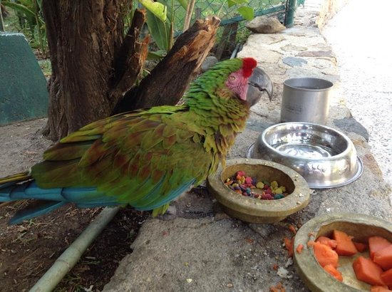 Park Royal Acapulco: El ave que vive en el hotel