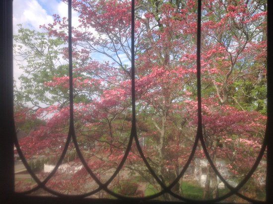 600 Main, A B&B and Victorian Tea Room: Dogwoods in bloom