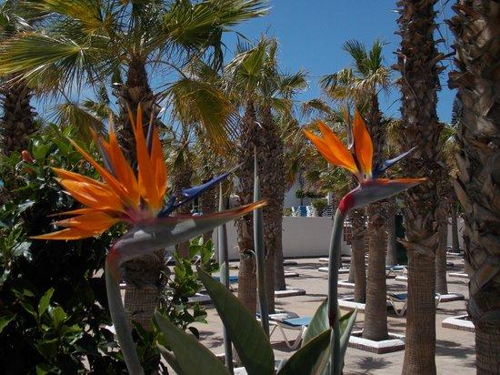 Blue Sea Costa Bastian: Walk Way Flowers