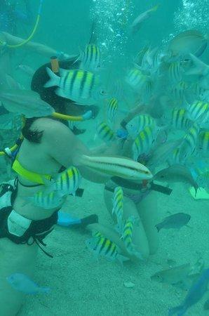 Ocean Adventures Bavaro Splash : snuba