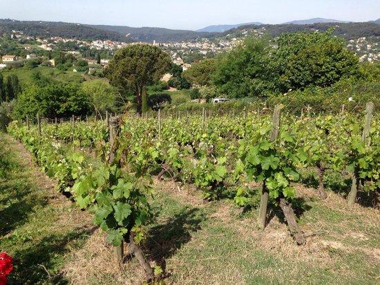 Le Petit Vigneau Winery