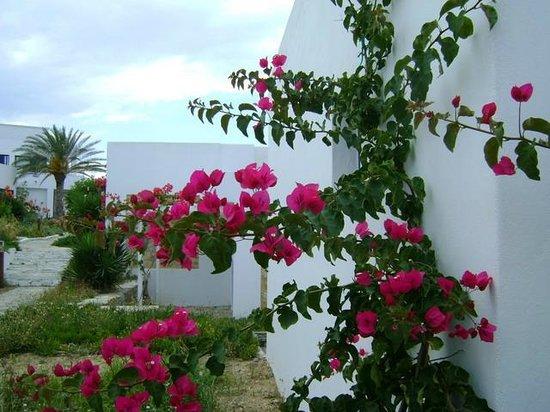 Knossos Beach Bungalows & Suites : территория вся в цветах