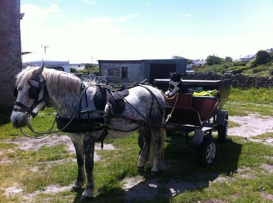 ‪Aran Island Horse Riding and Carriage tours‬