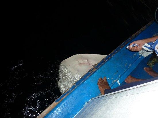 Holiday Island Resort & Spa : Рыбалка. Скат сорвался