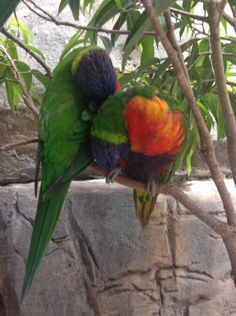 Jardines Busch: birds in the aviary, you can feed them