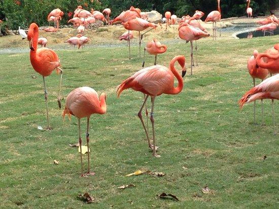 Jardines Busch: animals on display, so interesting