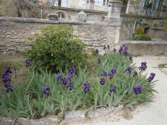 Saint-Paul de Mausole : Vincent's flowers.