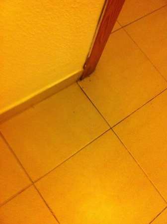 Aparthotel Playas Ca's Saboners: The ants after we cleant and cleaner did it still there