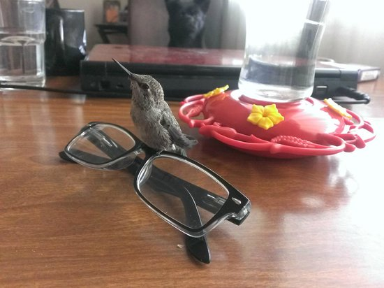 My Place Suites : Hummingbird healed! Our guests named him George!