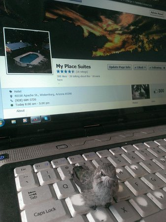 My Place Suites : Merketing assistant George The Hummingbird