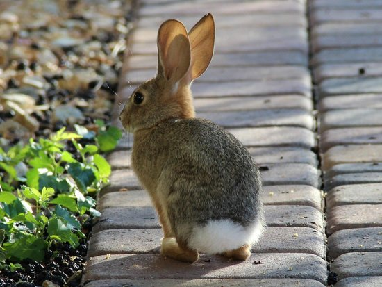 My Place Suites : Bunny at My Place