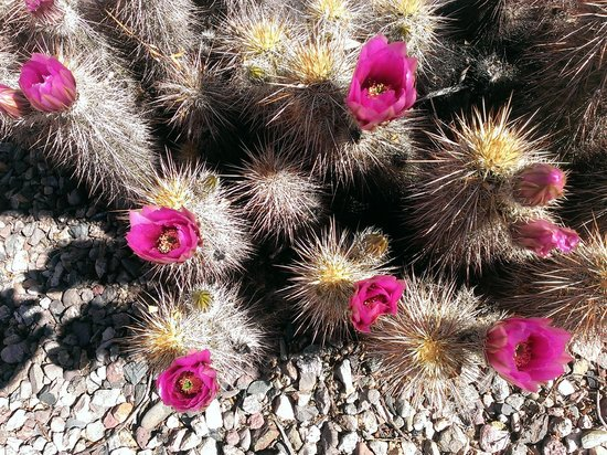 My Place Suites: Magnificent desert flowers