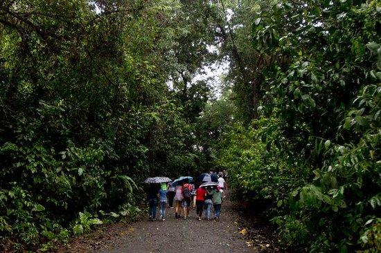 Playa Manuel Antonio: The main trail/road through the park