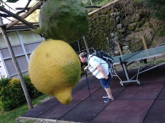 BEST WESTERN Hotel La Solara: Kissing a huge lemon in their lemon grove!