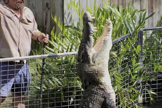 Hartley's Crocodile Adventures: Crocodile Show