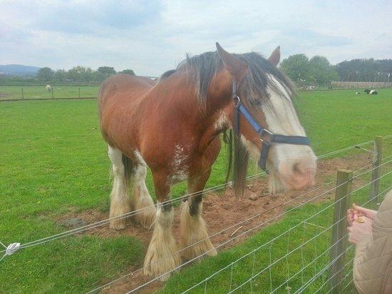 East Links Family Park: Horse