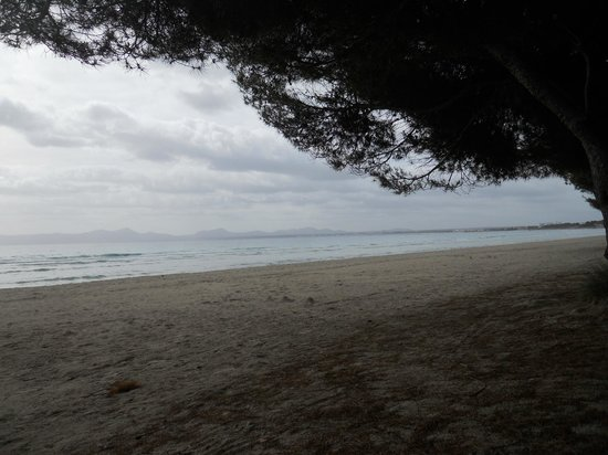 Playa de Alcudia: Entre pinos y arena.