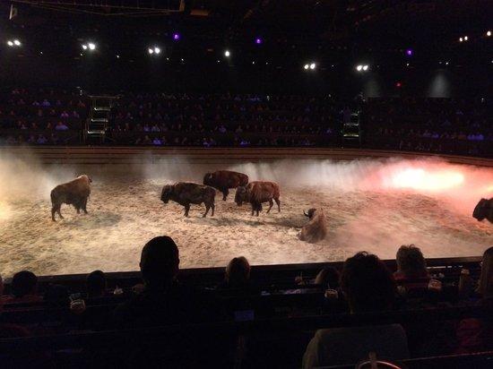Dolly Parton's Dixie Stampede Dinner & Show: buffalo