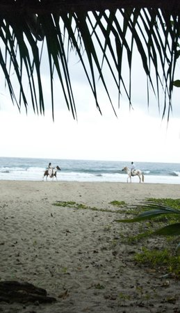 Hotel La Costa de Papito : Bride and groom on horses surprising guests with special entry