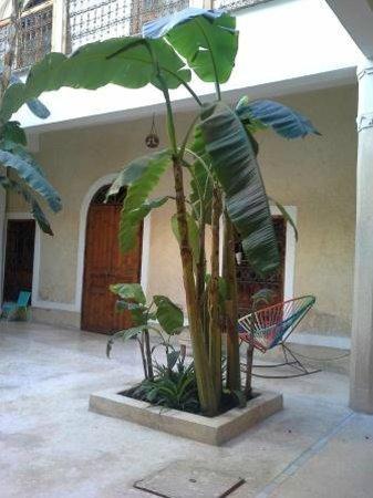 Chambres d'amis : interior garden