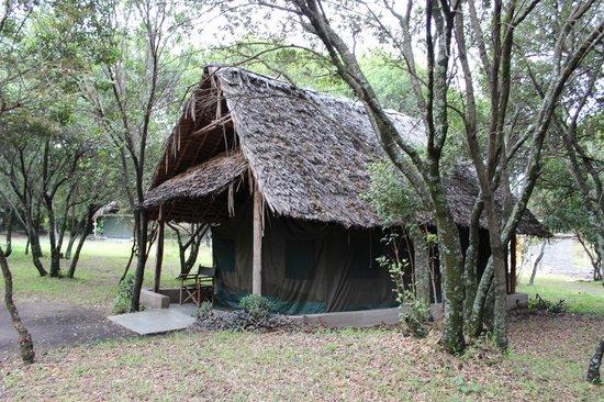 Enchoro Wildlife Camp : Tent