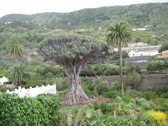 Hotel Best Tenerife: символ Тенерифе