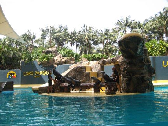 Hotel Best Tenerife: ЛОРО парк, шоу морских котиков