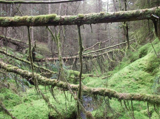 Kielder Water & Forest Park: our own hidden and undisturbed part of the world!