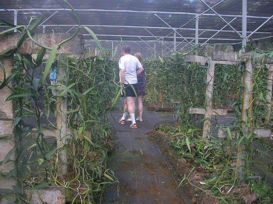 Le Taha'a Island Resort & Spa: Vanilla Plantation