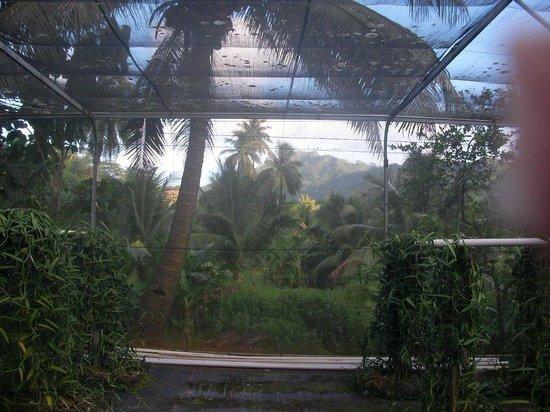 Le Taha'a Island Resort & Spa: tahaa safari tour