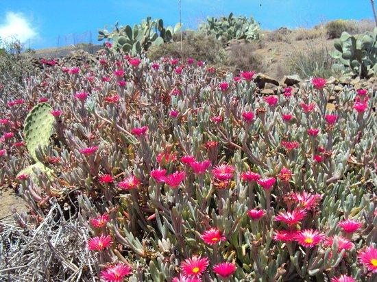 Blackstone Treks & Tours: Lanzarote Flora