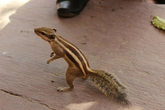 Agra Fort: Squirrel