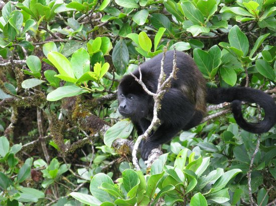 Valle Dorado: A monkey in one of the forests we visited