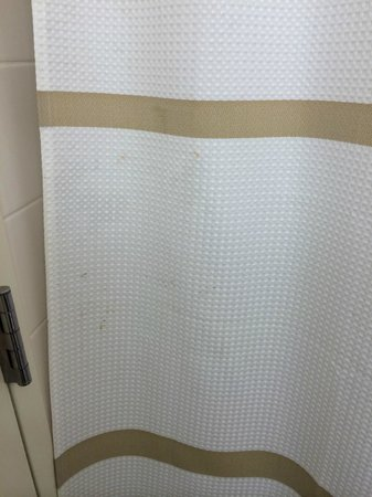 Washington Marriott Wardman Park : Stains on the shower curtain - we did not contact anyone about this