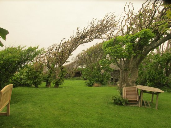 Llwyndu Farmhouse: Hotel Grounds, tree features