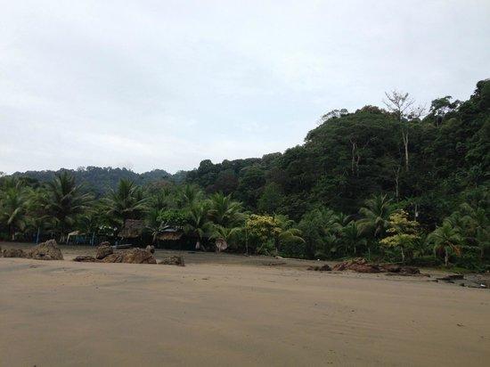 Playa de Oro Lodge : Playa del hotel