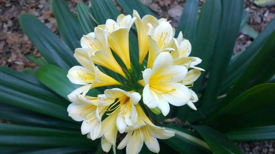 The Huntington Library, Art Collections and Botanical Gardens : Beautiful flowers!