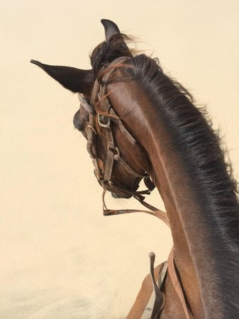 Rancho Daimari : Sultan the horse...a great horse!
