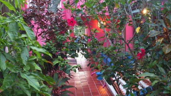 Cabanas El Encanto : Escada que da acesso é um jardim