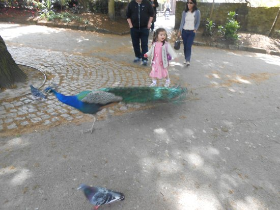 Holland Park : Little Girl and Peacock